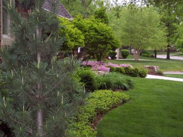 Create Backyard Privacy with Your Landscape Design
